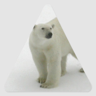 Polar Bear on the Arctic ice Triangle Sticker