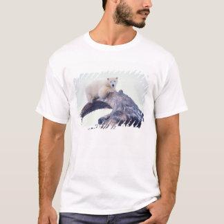 Polar bear on top of a bowhead whale jaw bone,