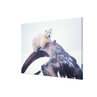 Polar bear on top of a bowhead whale jaw bone, canvas print