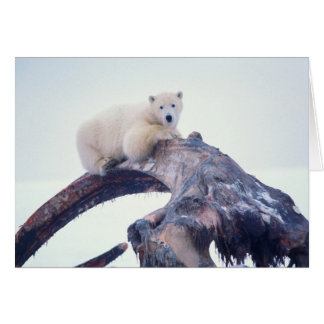 Polar bear on top of a bowhead whale jaw bone, card