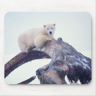 Polar bear on top of a bowhead whale jaw bone, mouse pads