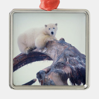 Polar bear on top of a bowhead whale jaw bone, square metal christmas ornament