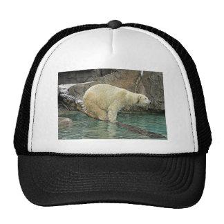 Polar Bear Out On A Limb Ball Cap Hat