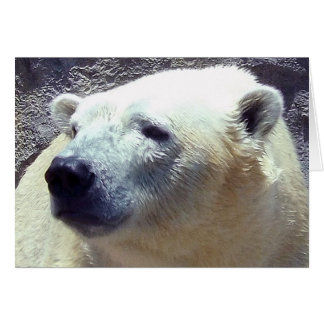 Polar Bear Photo Closeup Nikita Kansas City Zoo Card