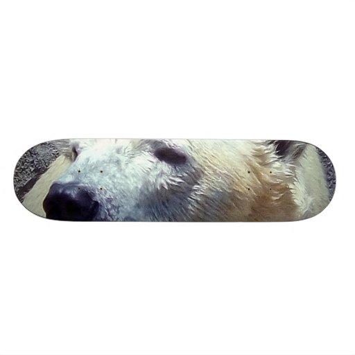 Polar Bear Photo Closeup Nikita Kansas City Zoo Skateboard Decks