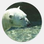 Polar Bear Photo Round Stickers