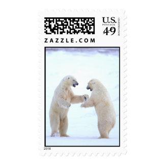 Polar Bear Play Postage Postage Stamp