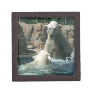 Polar Bear Play Premium Gift Box