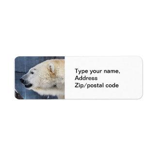 Polar Bear Portrait Label