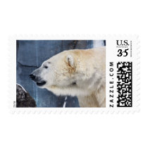Polar Bear Portrait Postage