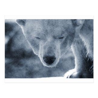 Polar Bear Portrait Postcard