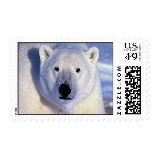 Polar Bear Postage