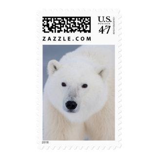 Polar Bear Postage Stamp