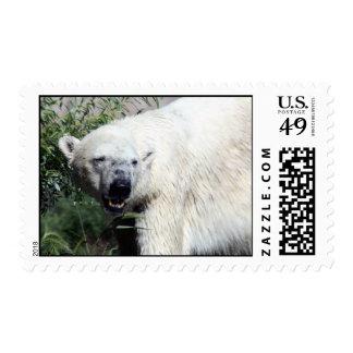 Polar Bear Postage Stamps