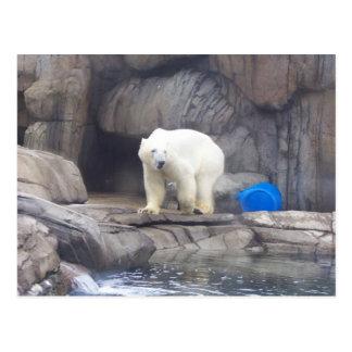 Polar Bear Postcard