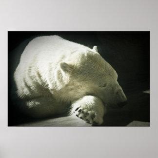 Polar Bear Posters