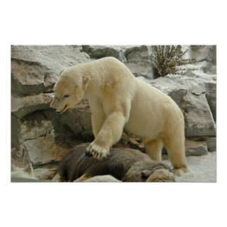 Polar Bear Poster Print