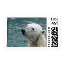 Polar Bear Profile Stamp