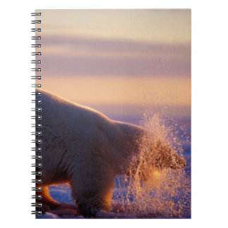 Polar bear pulling its head out of a hole in the notebook