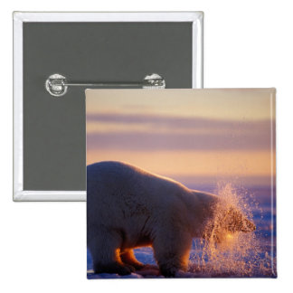Polar bear pulling its head out of a hole in the pinback button