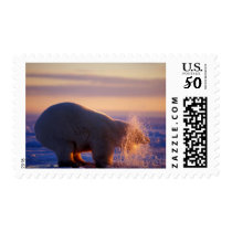 Polar bear pulling its head out of a hole in the postage