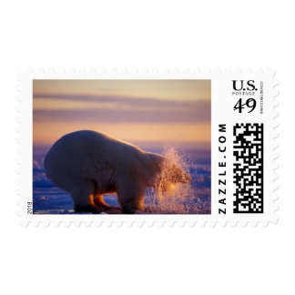 Polar bear pulling its head out of a hole in the stamp