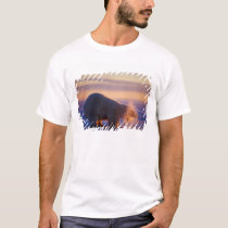 Polar bear pulling its head out of a hole in the T-Shirt