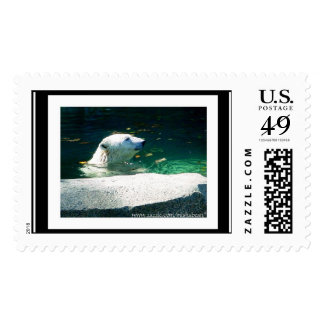 """Polar Bear Reflections"" - postage stamp"
