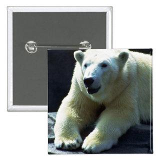 Polar Bear Resting, Frontal Pinback Buttons