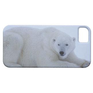 Polar Bear Resting in Snow iPhone SE/5/5s Case