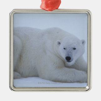Polar Bear Resting in Snow Metal Ornament