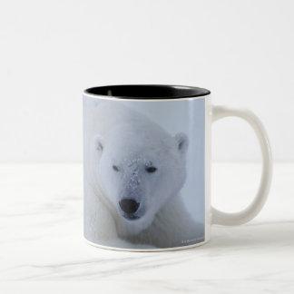 Polar Bear Resting in Snow Two-Tone Coffee Mug