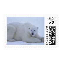 Polar Bear Resting in Snow Postage