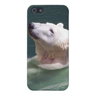 Polar bear resting iPhone SE/5/5s cover