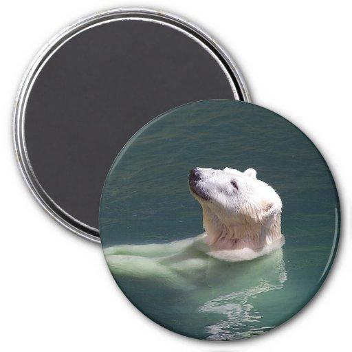 Polar bear resting fridge magnets