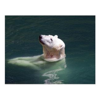 Polar bear resting postcard