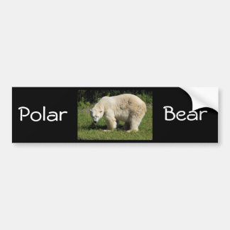 polar bear scowling bumper sticker