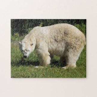polar bear scowling puzzle