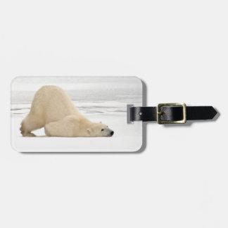 Polar bear scratching itself on frozen tundra luggage tag