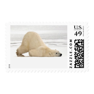 Polar bear scratching itself on frozen tundra stamp