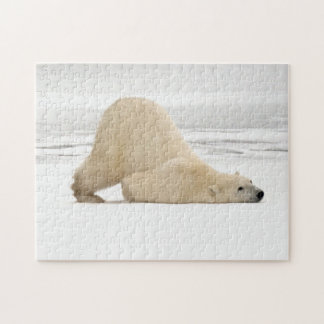 Polar bear scratching itself on frozen tundra puzzle