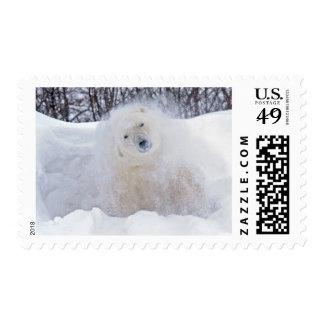 Polar bear shaking snow off on frozen tundra postage