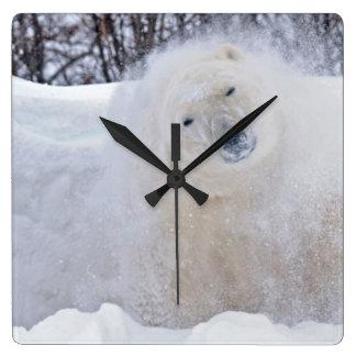 Polar bear shaking snow off on frozen tundra square wall clock