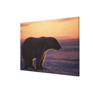 Polar bear silhouette, sunrise, pack ice of canvas print