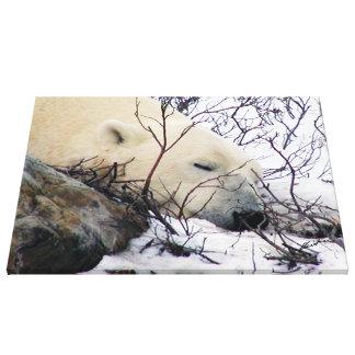 Polar Bear Snoozing Canvas Print