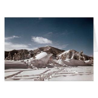 Polar Bear Snow Sculpture Cards