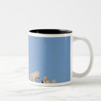 Polar bear sow feeding on grass to get her mugs