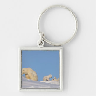 Polar bear sow feeding on grass to get her Silver-Colored square keychain