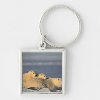 Polar bear sow lying down with spring cubs on keychain
