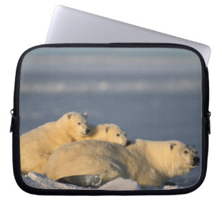 Polar bear sow lying down with spring cubs on laptop sleeve